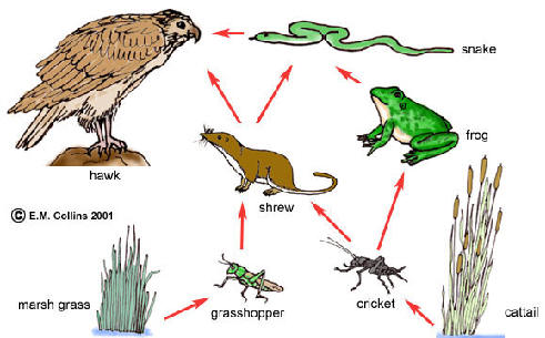 Food Web Interaction with Explanation - Rainforest